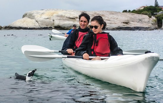 Simon's Town, South Africa: Penguin and kayaker interaction
