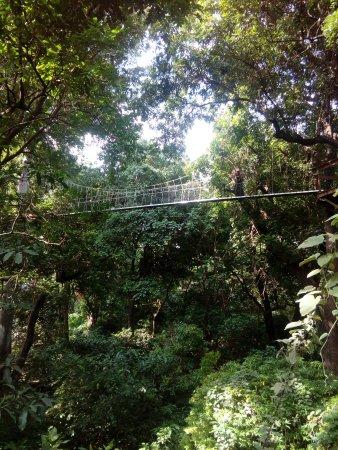 Treetop Walkway Lake Manyara