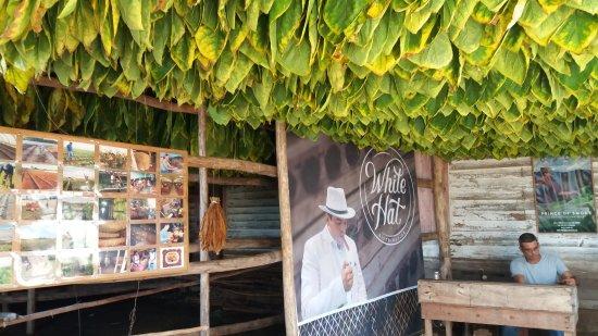 Alejandro Robaina Tobacco Plantation
