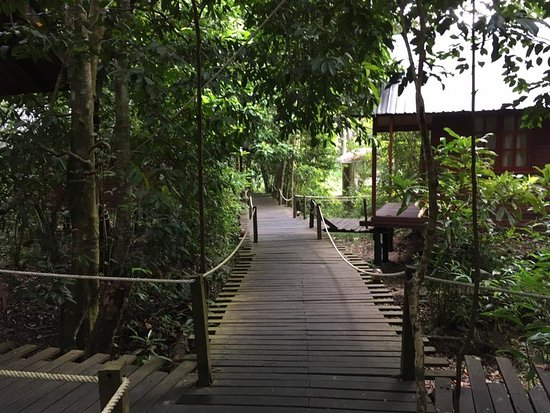 Kota Kinabatangan, Maleisië: walk way to the rooms