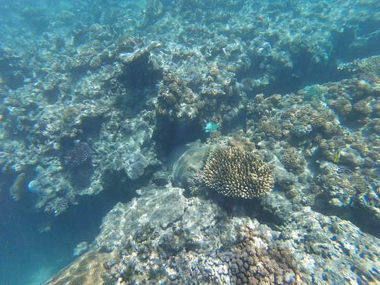 Beachcomber Island, Fiji: Some beautiful coral nearby in super-clear waters