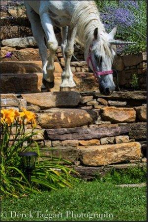 Lovettsville, VA: Part of the Magic of Stone Manpor- that elusive unicorn descending the garden's stone staircase