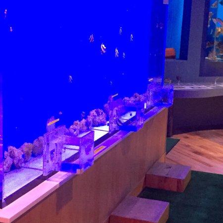 工夫がいっぱいの水族館