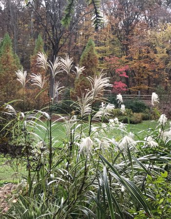 Far Hills, NJ: Tall grasses