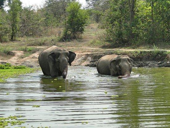 Tha Yang, Ταϊλάνδη: Elephant