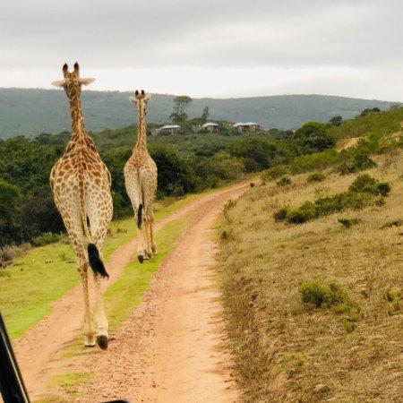 Albertina, South Africa: photo3.jpg