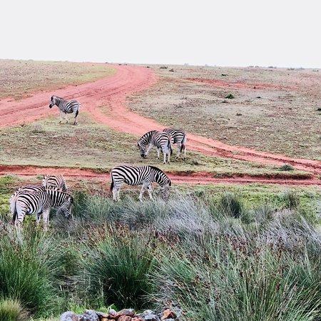 Albertina, South Africa: photo5.jpg