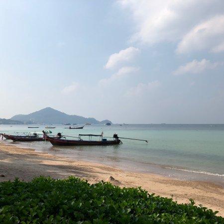 Palm Leaf Resort: photo2.jpg