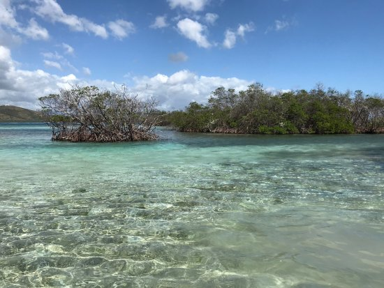 Parguera Water Sports and Adventures: Mangroves