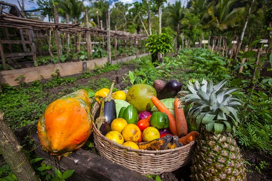 Punta Gorda, Belize: Our organic garden provides fruit and vegetables for our restaurant and bar.