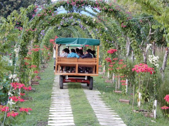 Cotton Tree Lodge: One of our new tours will take you to a beautiful 500-acre Spice Farm.