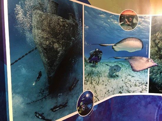 George Town, Grand Cayman: Stingrays!