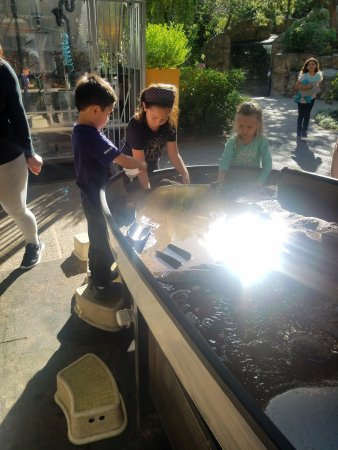 San Mateo, CA: they loved this sand and water table!