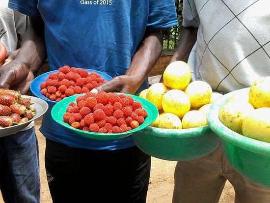 Sunbird Ku Chawe : Forest fruit