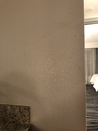 Embassy Suites by Hilton Orlando Airport: Coffee Stained Walls