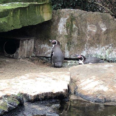Help on write an essay zoological garden