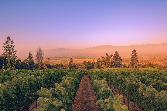Резерфорд, Калифорния: View of the vineyards