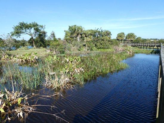 Peaceful Waters Sanctuary: Wetlands