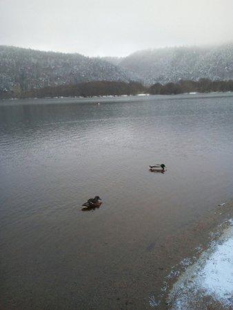 Le lac Chambon enneigé c'était superbe avec des canards qui faisaient une course