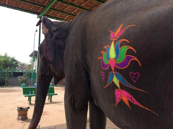 Elefantastic: painting her