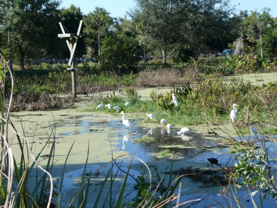 Peaceful Waters Sanctuary: Wading birds