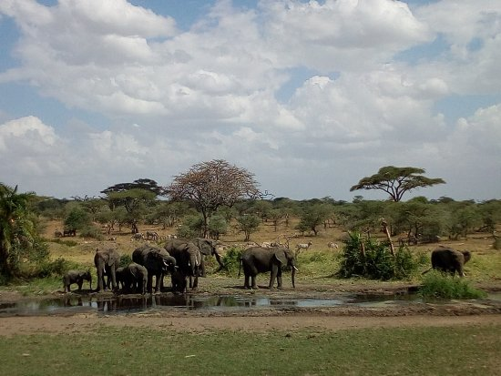 Ijue Africa Safaris: water is life,look how does nature provides life to these elephats in Serengeti#ijue