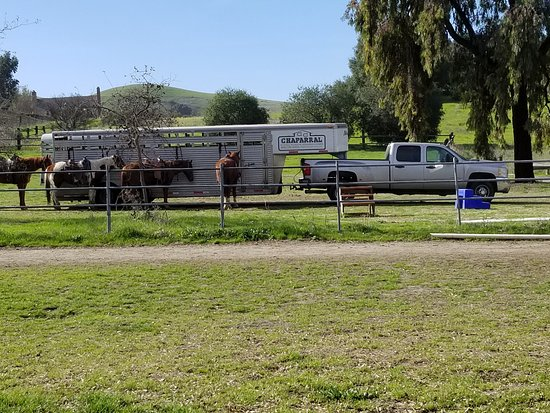 Milpitas, CA: One of their trailers with lesson horses tied up alongside