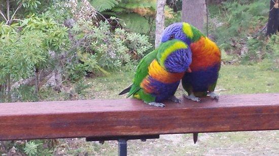 Vincentia, Australia: 20180204_192142_large.jpg