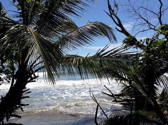 Cahuita, Costa Rica: IMG-20180204-WA0034_large.jpg