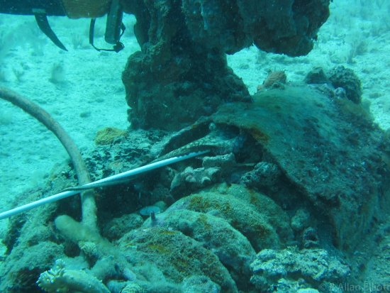 Discover St Kitts Tour (Reconfirm 48 hours): One of a few octopus.