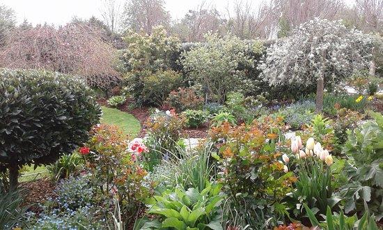 Rolleston, نيوزيلندا: Part of our Spring garden