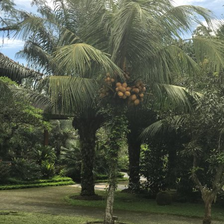 Bhuwana Ubud Hotel : photo1.jpg
