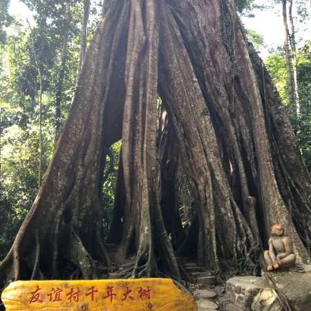 Betong, Thái Lan: Piyamit Millennium Tree