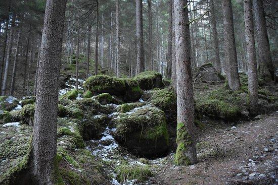 Cascate di Riva: Il bosco