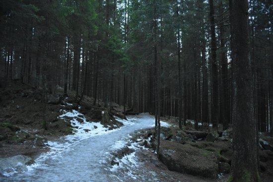 Cascate di Riva: Sentiero ghiacciato