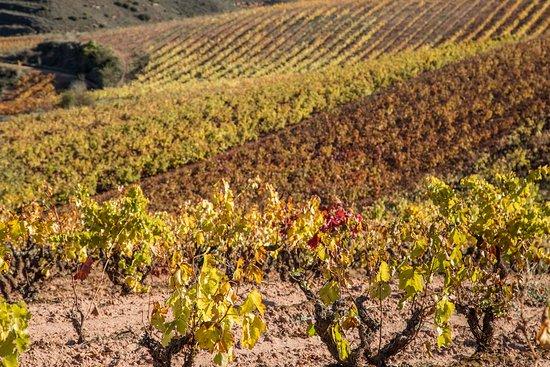 Camprovin, Spain: Paseo por los viñedos de Camprovín