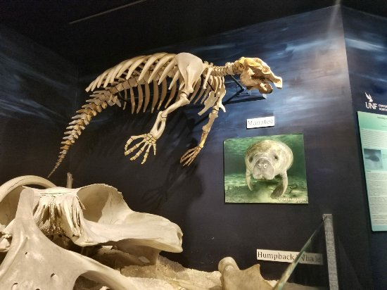 Museum of Science and History : 02-11-2018