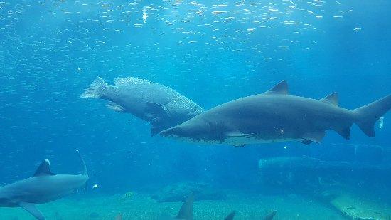 uShaka Marine World: 20180213_143516_large.jpg