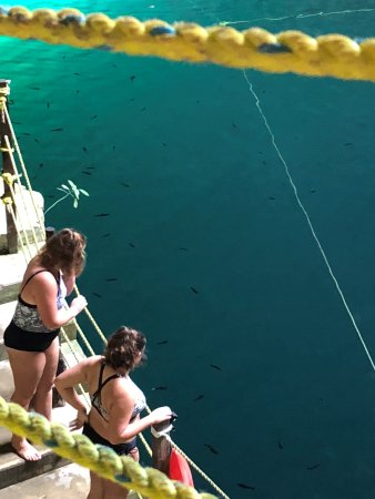 Cenote Hubiku: Clear water with visible fish