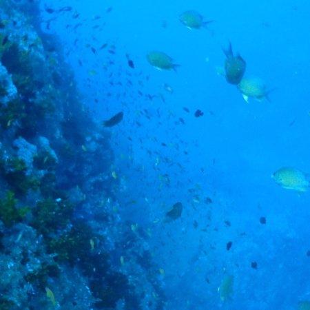 International Diving School : photo7.jpg