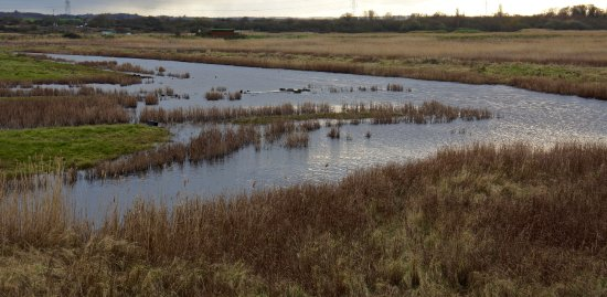 Oare, UK: A cold winter's day - hides are in the background