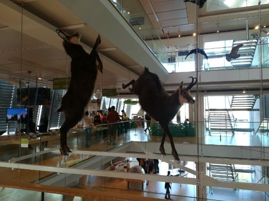 MUSE - Science Museum Foto