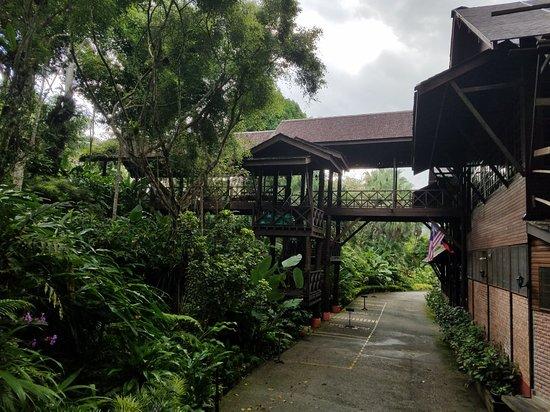 Sepilok, Malasia: 20180124_074630_large.jpg
