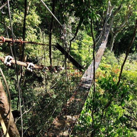 Chiclets Tree Zipline : photo5.jpg