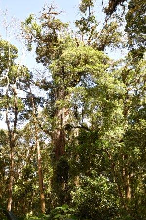 Soberania National Park: Park
