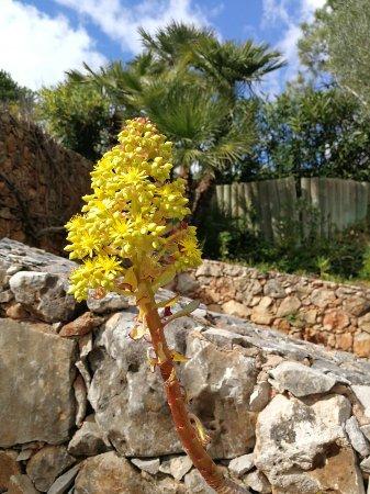 Algarve villa Vita park and