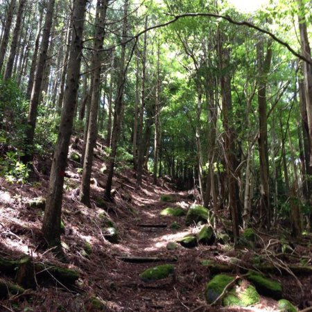 Higashiizu-cho, Giappone: 天然記念物、モリアオガエルの 生息地。 林道で森林浴を楽しながら しらぬたの池に行けます。