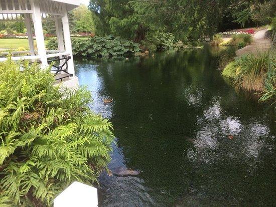 Taman Pollard: Stream