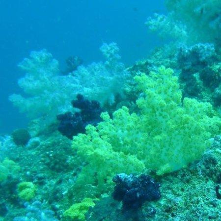 Taveuni Dive Resort: photo2.jpg