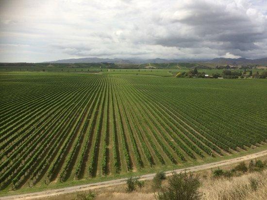 Brancott Estate Cellar Door and Restaurant: The Vine View